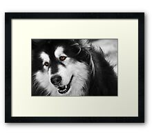 Furry Nuff Framed Print