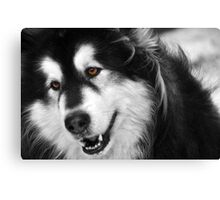 Furry Nuff Canvas Print