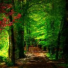 Belleek Castle Forest by Nicola Lee