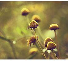 Autumn 1 Photographic Print