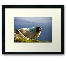 Sheep in Achill Framed Print