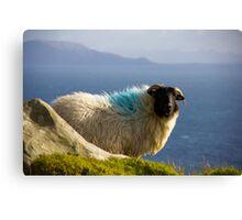 Sheep in Achill Canvas Print