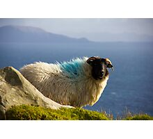 Sheep in Achill Photographic Print