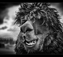 The Llama King by Wayman
