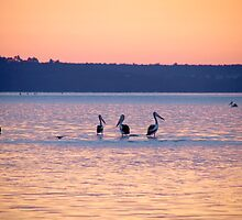 Dawn Pelicans by pennyswork