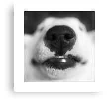Molly - English Bull Terrier Canvas Print