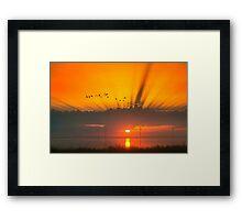 Morning rays Framed Print