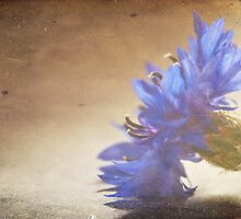 Blue Cornflower by Denise Abé