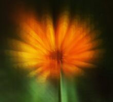 Calendula Explosion by Denise Abé