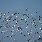 The Flock by Gnangarra