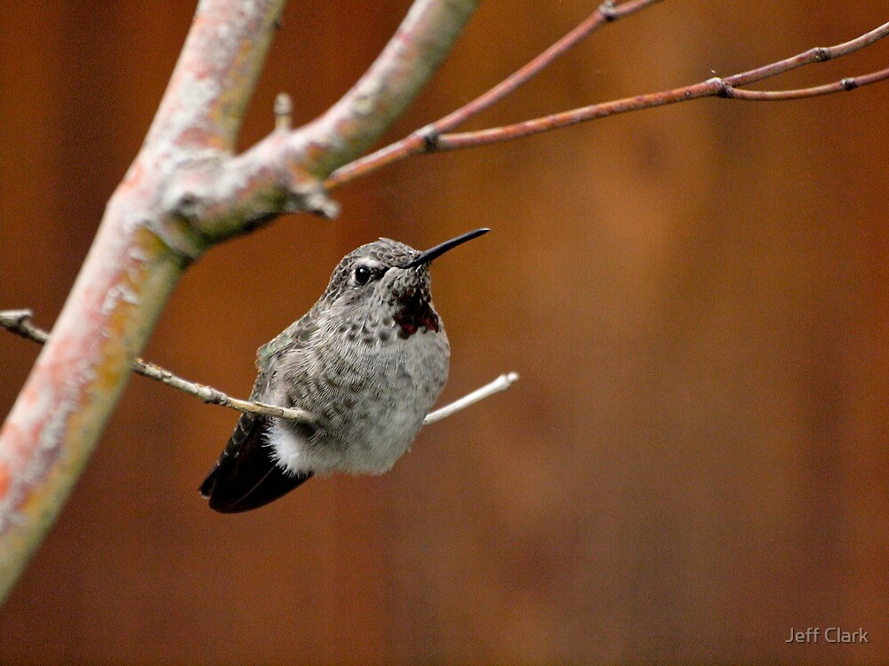 Hummingbird by Jeff Clark
