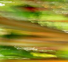 Chilli Lime by Kathie Nichols