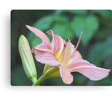 A Dream of a Lily Canvas Print