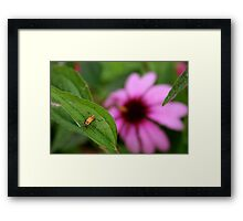 Insect and Echinacea Blossom Framed Print
