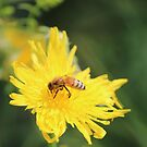 Bee pollinating a Flower by theartguy