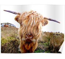 Attitude Hairy Coo Poster