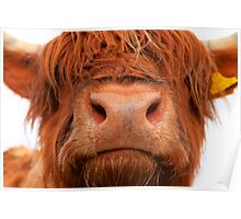 Kissing Hairy Coo Poster