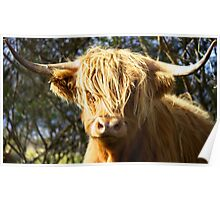 Hairy coo Poster