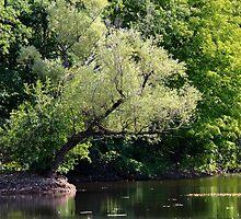 River Scene by theartguy