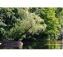 River Scene Photographic Print