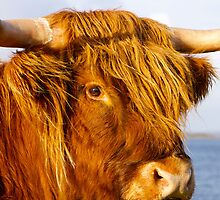Red Hairy Coo by Karen Marr