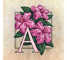 A is for Azalea Photographic Print
