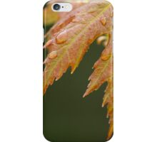 New Maple Leaves in Spring iPhone Case/Skin