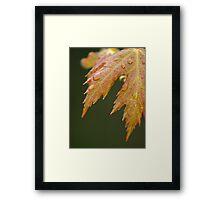 New Maple Leaves in Spring Framed Print