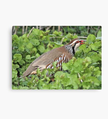 A Game Bird Canvas Print