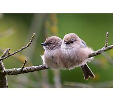 Bushtit Siblings Photographic Print
