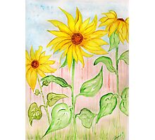 Sunflowers for Jeannette  Photographic Print