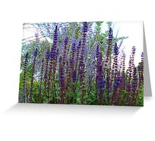 Purple and Violet days Greeting Card