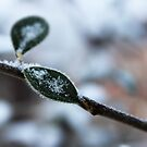 Frozen leaf by Domsbubble