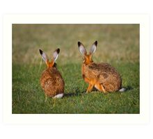 Hares Have Ears Art Print