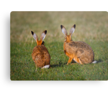 Hares Have Ears Metal Print
