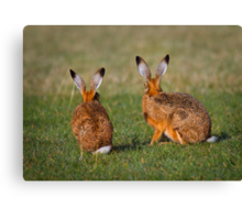 Hares Have Ears Canvas Print