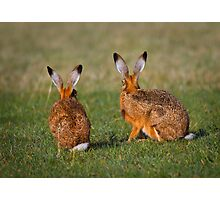 Hares Have Ears Photographic Print