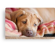 Little Big Red Canvas Print