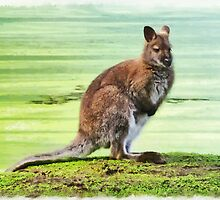 Bennets Wallaby  by PictureNZ