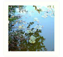 Lilypad Reflections Art Print