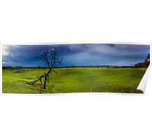 Country Victoria Tree in grass field. Poster