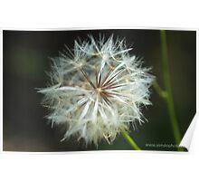 Make a Dandelion Wish Poster