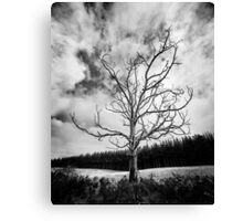 Black and White Alone Dead Tree on the highway Canvas Print