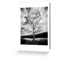 Black and White Alone Dead Tree on the highway Greeting Card