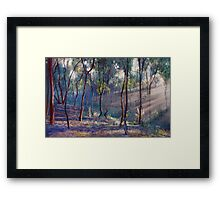 Rays Across the Gully Framed Print