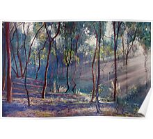 Rays Across the Gully Poster