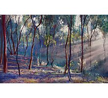 Rays Across the Gully Photographic Print