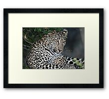 Another georgeous Sabi Sands leopard(I  know i am pretty !) Framed Print