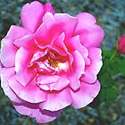 Rose and its new friend by ♥⊱ B. Randi Bailey