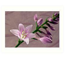 Hosta Blossom And Buds Art Print